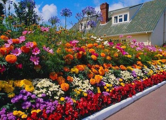Картинки по запросу цветы в саду с весны до осени